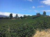 Cordillera del Fuego Kaffee Rarität