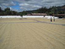 PURE Guatemala Antigua Kaffeebohnen